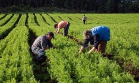 agriculturafamiliar-1