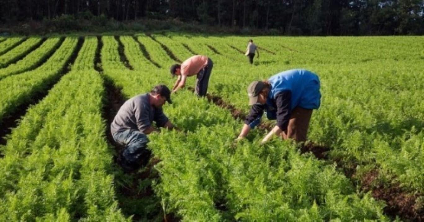 agriculturafamiliar 1