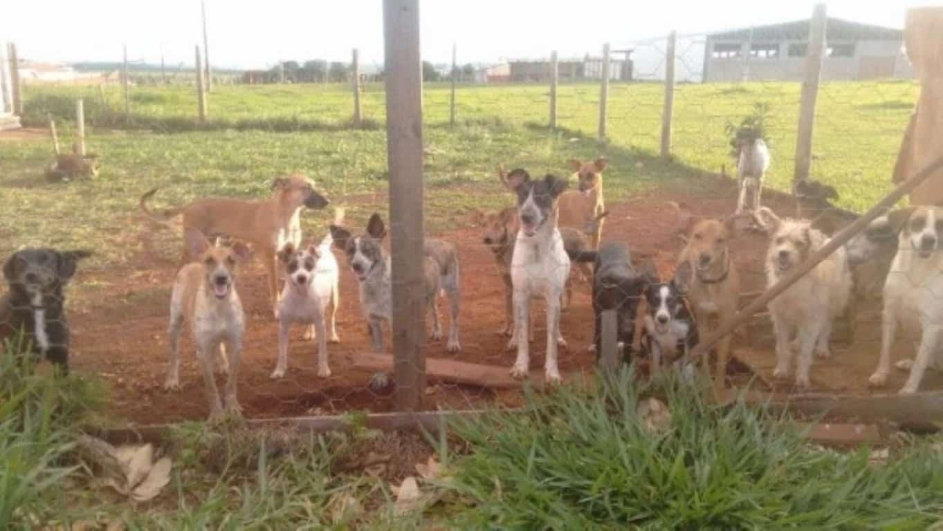 Shih tzu, maltês e spitz estão entre 1.500 animais resgatados de canil em SP