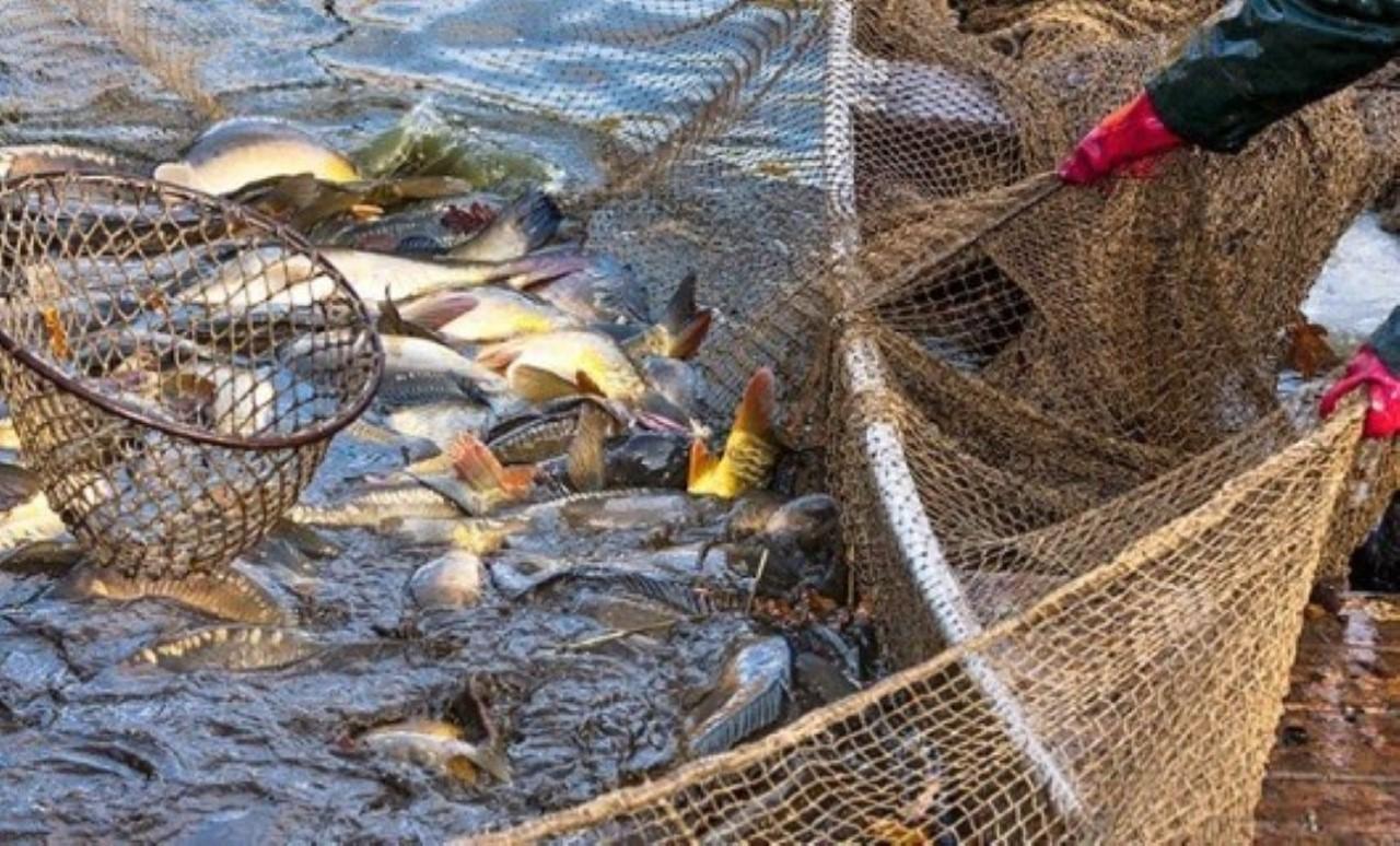 Poluição provocada por usina em MT provoca mortandade de 13 toneladas de peixes