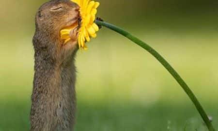 Fotógrafo faz sucesso na internet com imagem em que esquilo cheira flor.