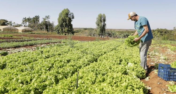 Ministério da Agricultura divulga lista de produtos com desconto em janeiro