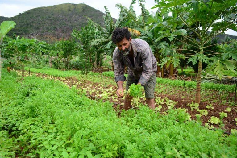 trabalhador rural